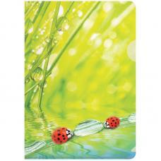Папка-уголок Berlingo Ladybird - А4 - С рисунком